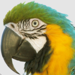 Macaw screenshot